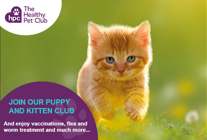 Joni the Healthy Pet Club kittens